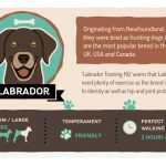 The Best Walks in the Lake District for your Dogs Breed