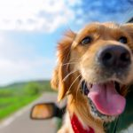 4 Reasons To Bring Your Dog On Holiday